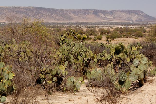 Mexico's beautiful deserts