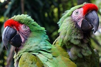 Guadalajara Zoo